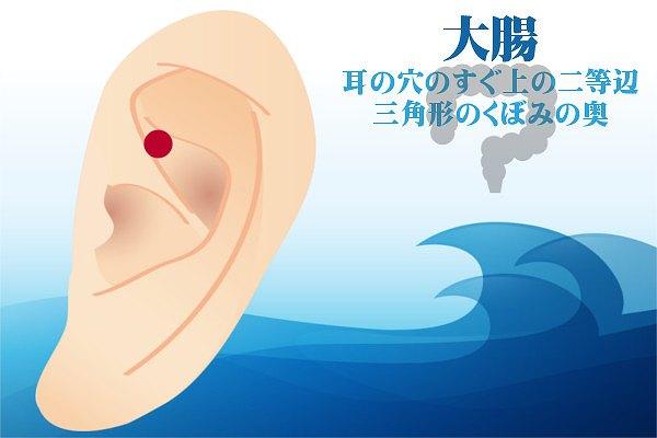 耳つぼダイエットの大腸の効果方法やり方