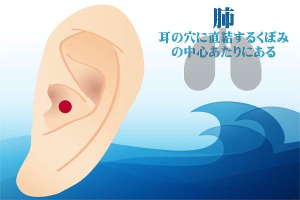 耳つぼダイエットの肺の効果方法やり方