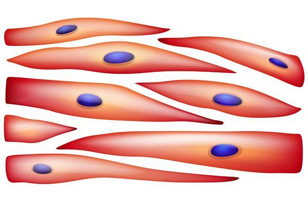 スウェディッシュマッサージの効果、リンパの流れが良くなり、むくみを軽減する