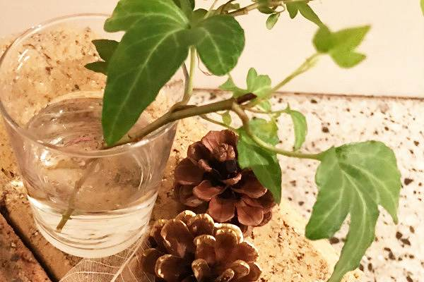 サロンの手作りインテリアのやり方【花と緑の装飾のコツ】
