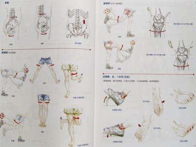 ボディ・ナビゲーションの本【改訂版】おすすめの理由、骨盤、関節の動きが学べる